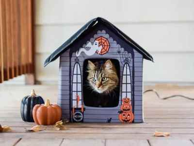Chewy: Halloween Heated Cat House Just $36 Shipped! (Reg $160)