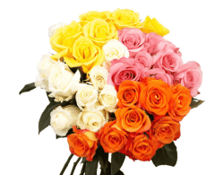 Home Depot: 100 Stems of Assorted Roses Fresh Flower Delivery $76.49 (Reg. $90)