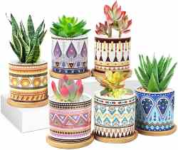 Amazon: 6 Pack Succulent Ceramic Plant Pots for ONLY $14.99 (Reg. $29.98)