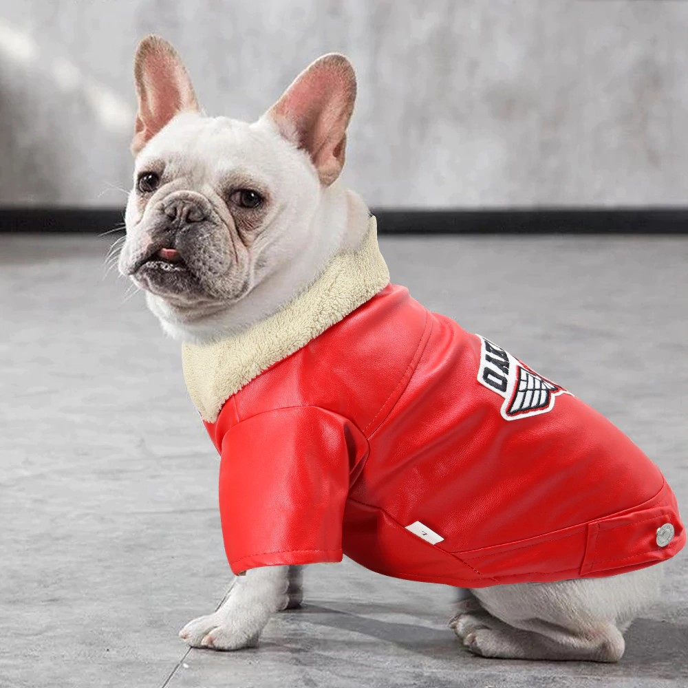 Top 5 stylish coats for male dog from AliExpress