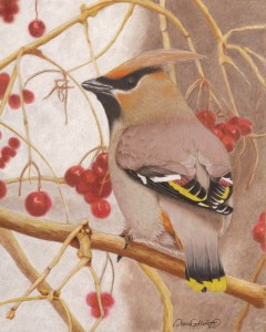 Bohemian Waxwing bird
