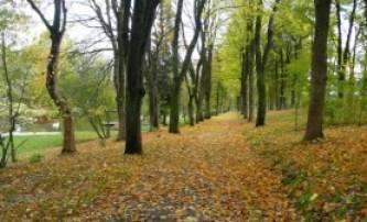 Autumnal walk Elbingerode