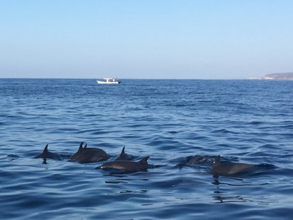 A Gang of Dolphins