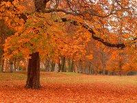 autumn,jpg