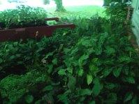 Cart Plants