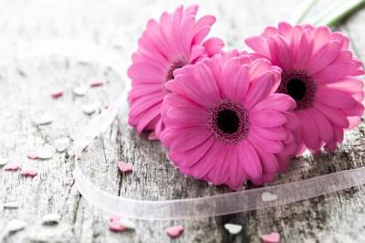 妻に結婚記念日に花を贈ろう!オススメの花と予算について