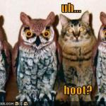 funny-pictures-cat-poses-as-an-owl