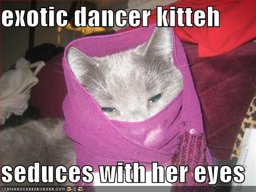 funny-pictures-your-cat-is-an-exotic-dancer