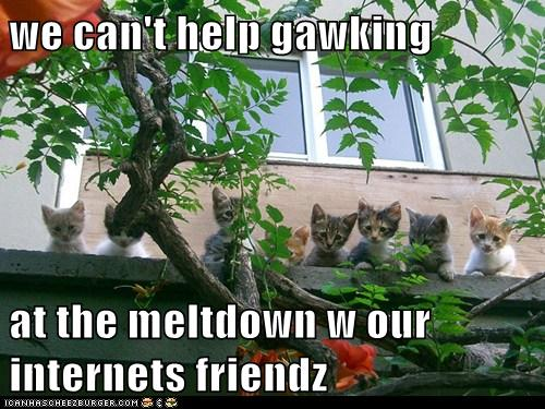 can't help gawking at the meltdown with our internet friendz