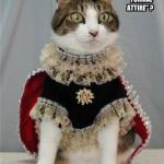 funny-pictures-cat-wears-formal-attire