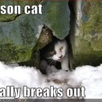 Prison Cat