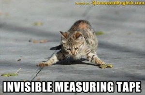 funny-cat-measuring-tape
