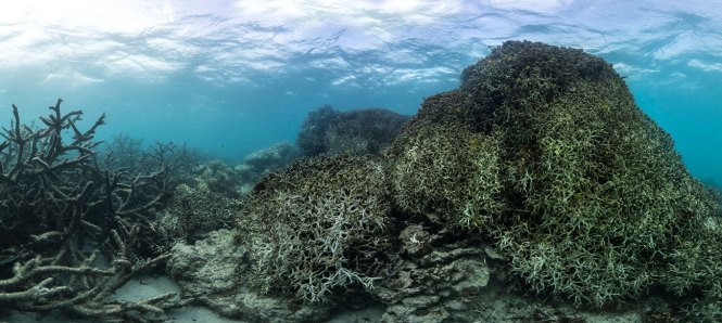Dead coral in the Great Barrier Reef.