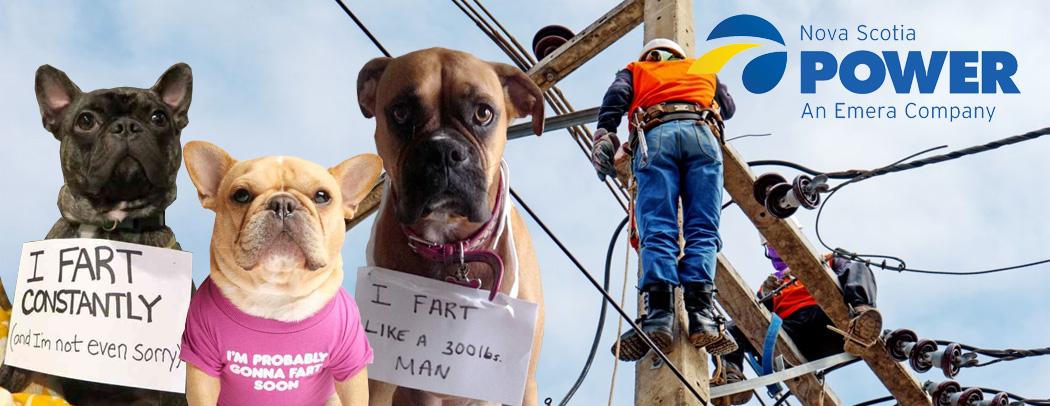 nova scotia power dog collage