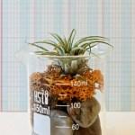 How To Make A Diy Air Plant Terrarium Dear Handmade Life