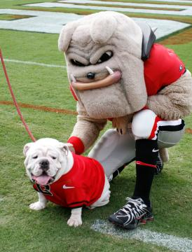 university-of-georgia-bulldogs