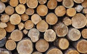 cutting down tree yelling timber