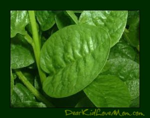 Spinach DearKidLoveMom