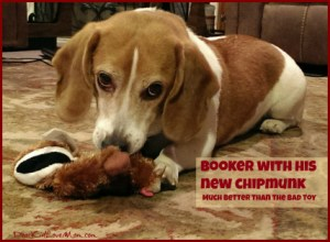 Booker with his new Chipmunk toy DearKidLoveMom.com