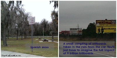 Spanish Moss and billboards in Georgia DearKidLoveMom.com
