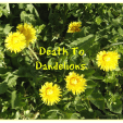 Sunday, Dandelions, and …