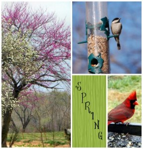 Spring is a wonderful time! DearKidLoveMom.com