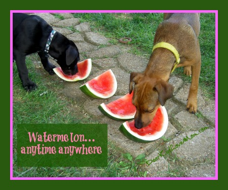 Watermelon. Anytime, anywhere. dearkidlovemom.com
