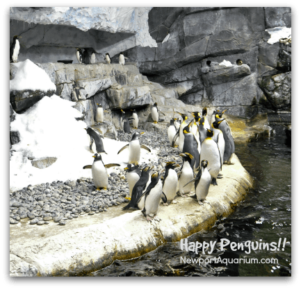 Happy penguins at the Newport Aquarium. DearKidLoveMom.com