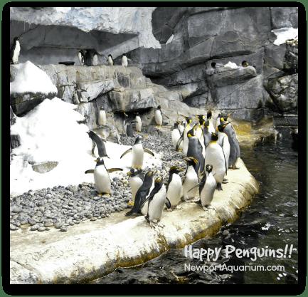 Happy penguins at the Newport Aquarium. DearKidLoveMom.com