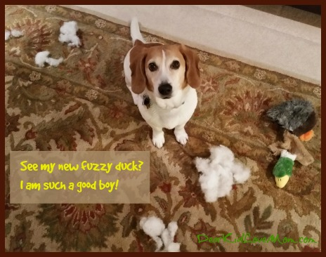 See my new fuzzy duck? I am such a good boy. DearKidLoveMom.com