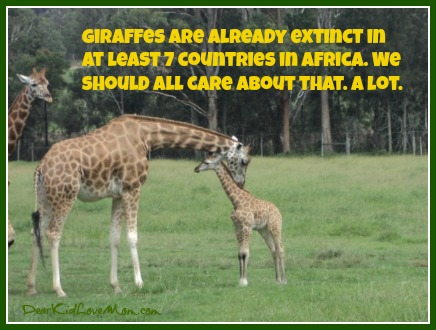 Giraffes are already extinct in at least 7 countries in Africa. We should all care about that. A lot. DearKidLoveMom.com