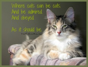 Where cats can be cats. And be admired. And obeyed. As it should be. DearKidLoveMom.com