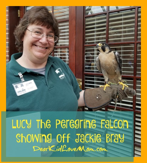 Lucy the Peregrine Falcon DearKidLoveMom.com
