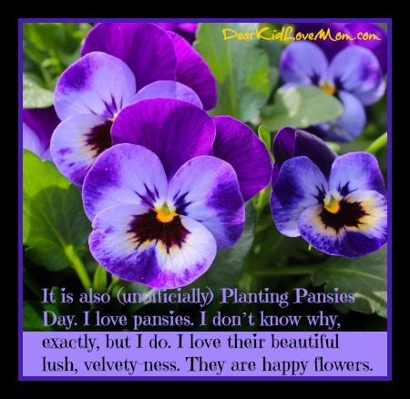 It is also (unofficially) Planting Pansies Day. I love pansies. I don't know why, exactly, but I do. I love their beautiful lush, velvety-ness. They are happy flowers. DearKidLoveMom.com
