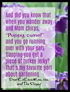 "And did you know that when you wander away and Mom chirps, ""Puppy, come!"" and you go running over with your ears flapping you get a piece of turkey jerky? That's my favorite part about gardening. DearKidLoveMom.com"