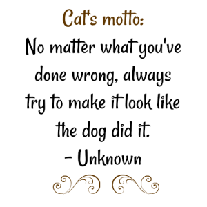 Cat Motto: No matter what you've done wrong, always try to make it look like the dog did it. Unknown