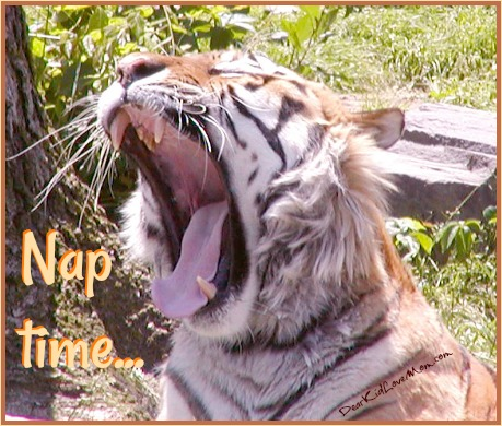 """What do yawns mean? I think they mean """"bed time."""" DearKidLoveMom.com"""