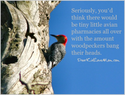 Seriously, you'd think there would be tiny little avian pharmacies all over with the amount woodpeckers bang their heads. DearKidLoveMom.com