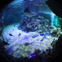 The New Ideas Zone at Weymouth SEALIFE