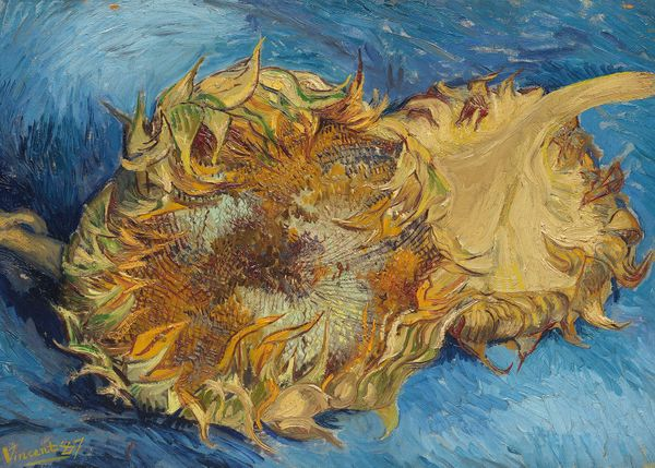 sunflowers by van gogh poster