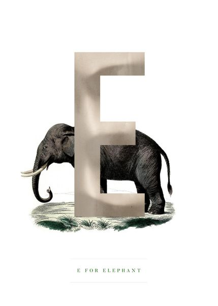 Purchase E For Elephant Poster Online Dear Sam