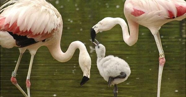 gay animals flamingos