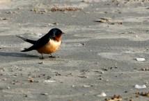 Scouting a Galveston beach