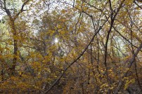 Colorful fall foliage near the pour-off