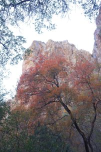 Fall leaves in Pine Canyon