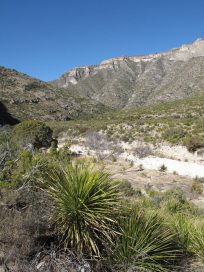 Desert going into McKittrick Canyon