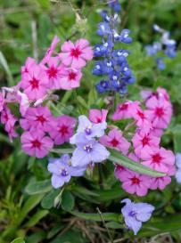 A prairie bouquet