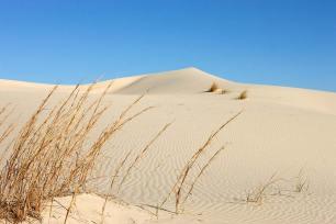 Sahara Desert scene