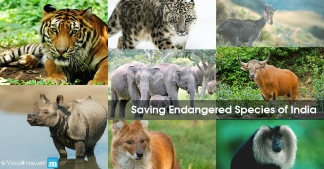 india critically endangered species