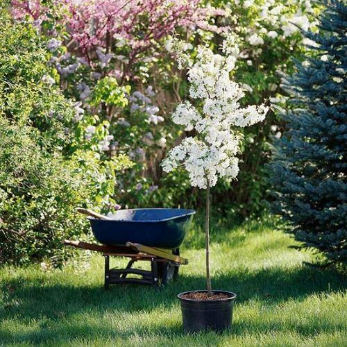 gartenpflege tips - boisholz, Terrassen ideen